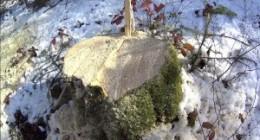 У Трускавці зафіксували незаконну вирубку лісу