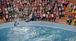 Для потребуючих діток зі всієї Львівщини у трускавецькому дельфінарії «Оскар» організували грандіозне свято