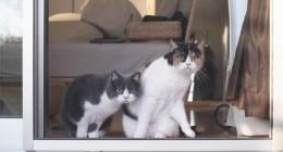ee25e5b43e-cats