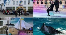 фото http://photo-lviv.in.ua/den-narodzhennya-oskara-abo-scho-delfiny-podaruvaly-dityam/