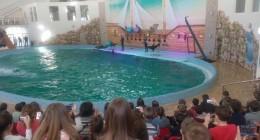За півтора місяця трускавецькі дельфіни вже потішили більше 200 дітей та бійців АТО