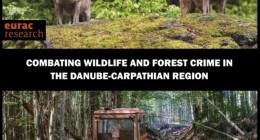 Незаконна вирубка та браконьєрство загрожують останнім недоторканим лісам та знаковим видам дикої природи
